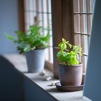 トイレと風水の関係!おすすめな色・アイテム・観葉植物