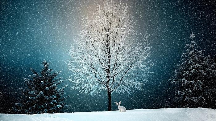 彼氏がクリスマスに会ってくれない!どう過ごせばいいの!?