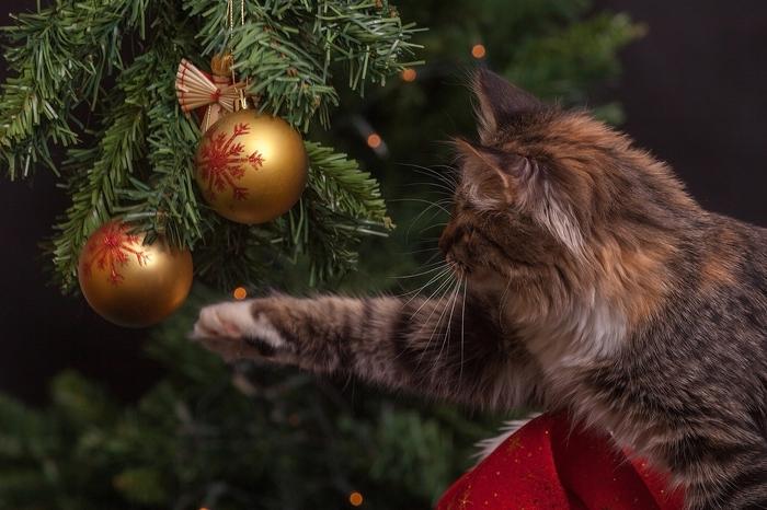 クリスマス前なのに誘われない!自分から誘うのはNG?