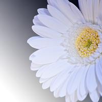 風水的な白色の効果とは?活用法&注意点