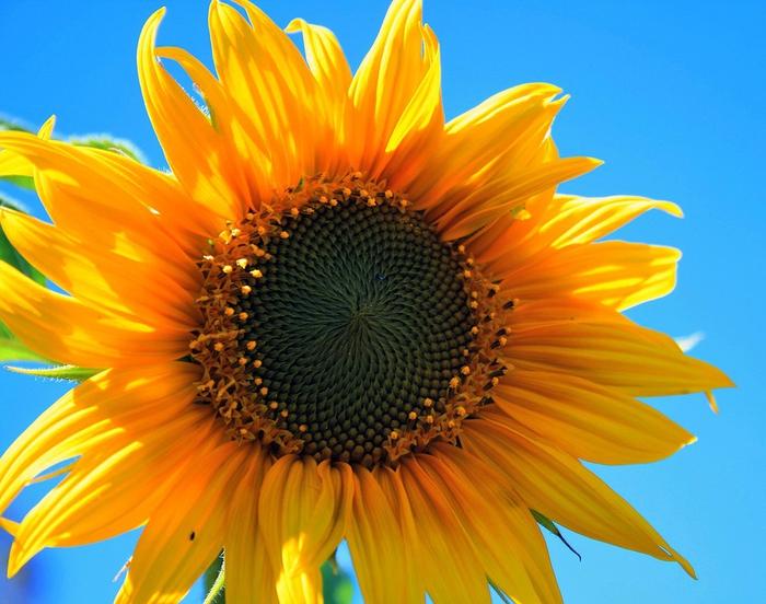 風水的な黄色の効果とは?活用法&注意点