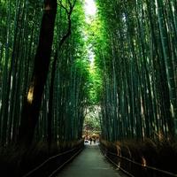 口コミで話題!東京・笹塚で霊視が当たると評判の占い師3選