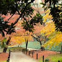 岡山県で算命学をしよう!本当に当たると評判の占い師3選