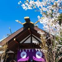 東京大神宮でオススメ!当たるおみくじ占い3選!