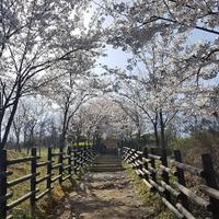 東京・杉並区の当たる占い!おすすめ占い師・占い館5選