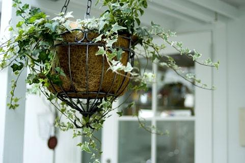 縁起物の植物とは?おすすめの方角や置き方