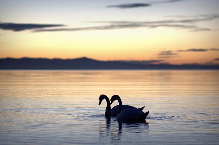 北海道の美しすぎるパワースポット!青い池