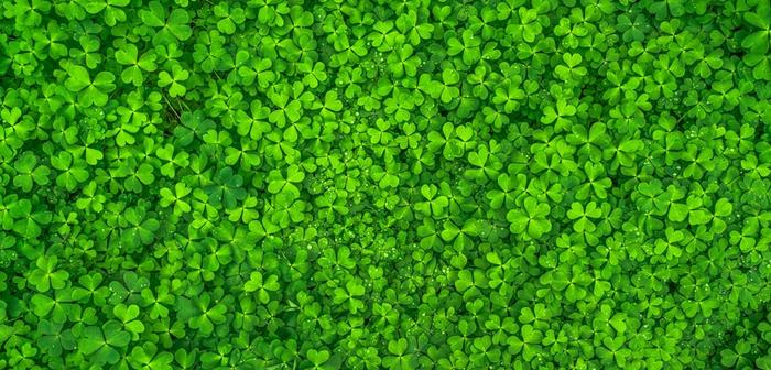 緑色のもつ風水的な意味や効果とは?