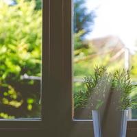 風水にも効く!おすすめの観葉植物の種類まとめ