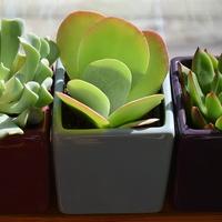 効果別!風水でおすすめな観葉植物の選び方&置き方