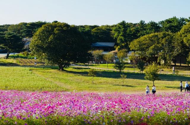 茨城県・ひたちなかで当たる占いがしたい!人気の占い館&占い師