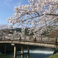 京都のパワースポット!!宇治上神社の効果&口コミ