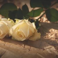 大阪で話題の『黒薔薇&白薔薇』ってなに!?それぞれの人気占い師まとめ