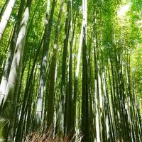縁切りや縁結びに!京都のパワースポット安井金比羅宮