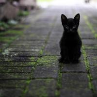 黒い招き猫からご利益を!千葉にあるパワースポット…笠森観音とは