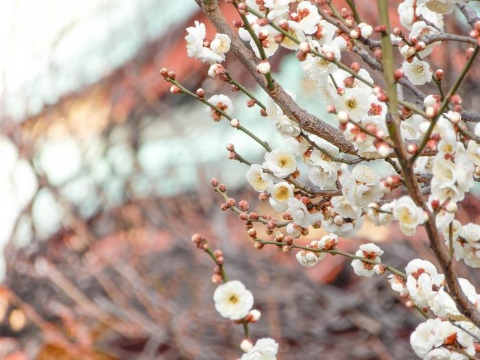 学問の神様がいる東京のパワースポット…亀戸天神社の魅力とは