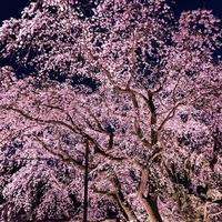 しだれ桜が人気の福井にあるパワースポット…足羽神社のご利益とは