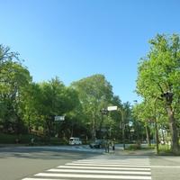 仕事運をアップしよう!赤坂のパワースポット…赤坂氷川神社とは