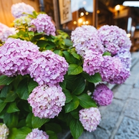 復縁したい人集まれ!東京のパワースポット…白山神社の魅力