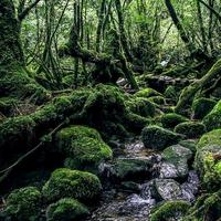 世界自然遺産に登録された屋久島にあるパワースポットまとめ
