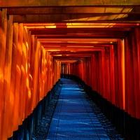 埼玉にあるパワースポット! 大宮氷川神社のご利益