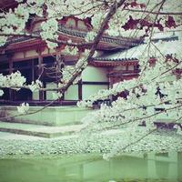 栃木県にあるパワースポット!日光東照宮のご利益