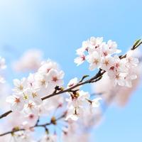 山梨県にあるパワースポット!金桜神社のご利益&口コミ