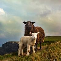 牡羊座の男の別れた後の心理&復縁する方法