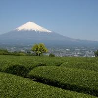 静岡県で当たる!おすすめ占い師・霊能者9選