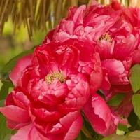 中国で縁起が良い花、意味や由来は?