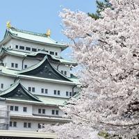 愛媛県で本当に当たる!おすすめの占い師・霊能者7選