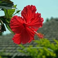 沖縄で仕事運のご利益がある!強力パワースポット5選