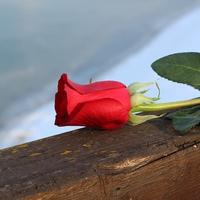結婚してるのに好きな人ができた…離婚したいけど後悔する?