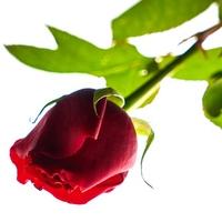 バツイチ同士の結婚だからこそうまくいく?5つの理由と体験談