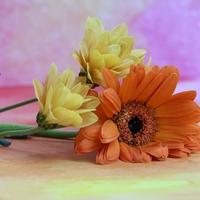 バツイチ子持ちの再婚は難しい?シングルマザーの再婚率