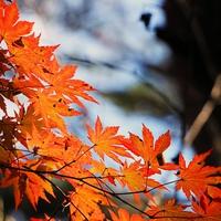 京都のパワースポット! 赤山禅院のご利益&口コミ