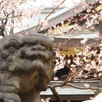 【関東編】呪いの神社を東京中心に紹介